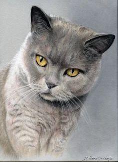 OH MY!!  This Precious Cat Looks JUST Like Our Russian Blue Cat, Elli Mae!  by ARTIST D. SEKSTINSKAJA
