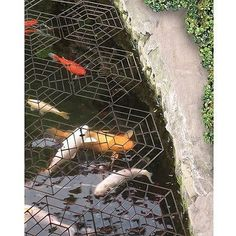 Floating fish koi pond observatory lets you view your fish for Garden pond guards