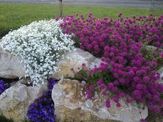 Rockery and decoration of gardens and terraces Garden Art, Garden Plants, Garden Design, Stone Edging, Wooden Containers, Alpine Garden, Backyard, Patio, Outdoor Living