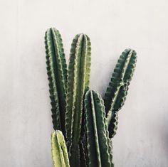outdoor plant, cactus // @allisonnkelleyy