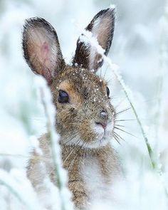 .Snow bunny