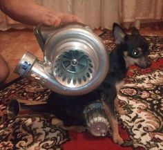 turbo charger dog