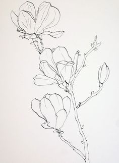 Pen Drawings of Flowers | Completed ink drawing of pink magnolia flowers prior to laying down a ...: