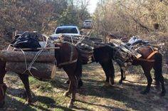Συνέλαβαν σε Πρέσπα και Πολυάνεμο Καστοριάς παράνομους αλιείς και υλοτόμους (φωτογραφίες)