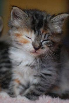 15 very cute baby cat pics