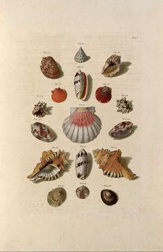 http://1.bp.blogspot.com/_haOBPG0HarQ/TUFfI4HrwyI/AAAAAAAAACo/c5C8SQboIS4/s1600/sea-shells-2.jpg