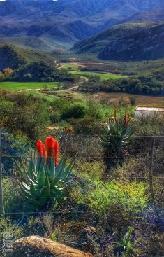 South Africa, Vineyard, African, Mountains, Nature, Plants, Travel, Outdoor, Sun