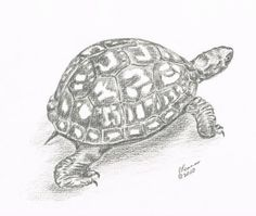"Eventually I'ma get a tattoo.  I'm thinking this lil guy, behind my ankle, with ""Movin On"" or ""Move Along"" kinda hidden in his shell."