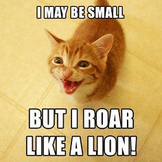 ROAR!! http://coleandmarmalade.com