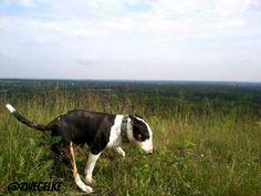 zwegel het hondje | tsū