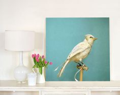 Natural History Large Wall Art of White Bird - Albino Blue Jay - 30x30 Photograph Print