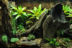 Love the log piece- don't know what kind of wood it is (for underwater usage). Tree Frog Terrarium, Gecko Terrarium, Terrarium Reptile, Aquarium Terrarium, Terrarium Plants, Planted Aquarium, Aquarium Fish, Terrarium Tank, Reptile Habitat