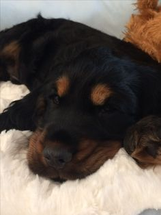 Welcome home Sam (8weeks)