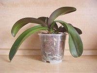 pro orchideje | Nemoci+léčení Planter Pots