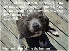 ....believe it! its not the dogs fault its the owners fault and its time to change that