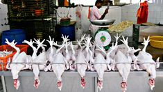 Ban Wet Markets - The Atlantic Live Animals, Try Harder, Chickens Backyard, Things To Come, Marketing, Pose, Diversity, Health, Crowns