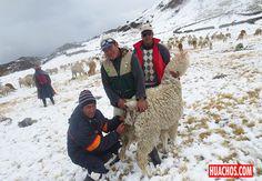 El Perú, empezando de nuevo con salud, Seguro Agrario Catastrófico y otros temas colaterales.