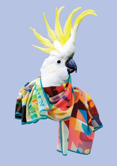Blazon: The Eileen, All Scarves are designed in the UK and made in the softest Spun Rayon so that they drape and fold beautifully around you. They can be washed at 30 degrees, so you don't have to worry about spilling cocktails or anything else!