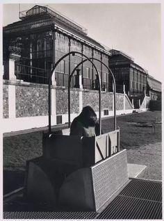 Robert Doisneau - Un gorille dans l'ascenseur, Museum d'Histoire Naturelle…