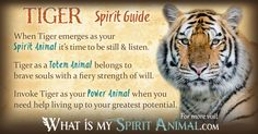 "Tiger Symbolism & Meaning - My spirit animal was characterized as ""feline"" & then divided - tiger was the most, lion next, snow leopard, then leopard.  I find that very interesting since tigers have always been one of my favorite animals."