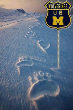 Funny pictures about Polar Bear Tracks. Oh, and cool pics about Polar Bear Tracks. Also, Polar Bear Tracks photos. Beautiful Creatures, Animals Beautiful, Cute Animals, Arctic Animals, Love Bear, Big Bear, Michigan Go Blue, Animal Tracks, Go Big Blue