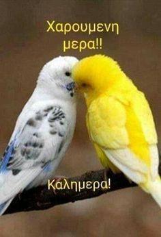 Parrot, Good Morning, Garden Design, Animals, Mornings, Beautiful, Decor, Parrot Bird, Buen Dia