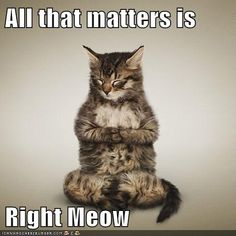 Mindfulness Kitteh Will Show You Teh Way