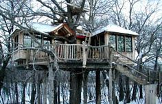 i-dream-of-living-in-a-tree-house