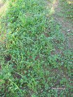 Φεβρουάριος στο αγρόκτημα Herbs, Plants, Herb, Flora, Plant, Planting