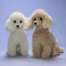 guide to haircuts bichon poodle haircuts images poodles 5913