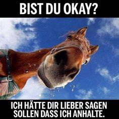 Tja, die Gedanken eines Pferdes ;D