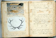 How to keep a field journal