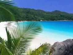 Issız Cennet SEYŞELLER - Praslin adası:Vallée de Mai ile UNESCO Dünya Mirası listesindedir.