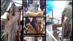 Petition · Barack Obama: President Obama: Please urge South Korea to ban the dog and cat torture and consumption! · Change.org