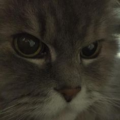 愛猫さくら姫 SHOOP+FACTORY(シュープ・ファクトリー)@オーナーブログ-3ページ目