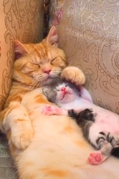 and kittens Morning snuggles Cute Baby Cats, Cute Little Animals, Cute Cats And Kittens, Cute Funny Animals, Kittens Cutest, Funny Cats, Baby Dogs, Fun Funny, Cute Animal Videos