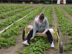 Diy crop picker and weeder assistant Herb Garden In Kitchen, Veg Garden, Vegetable Garden Design, Garden Tool Shed, Garden Fencing, Sustainable Farming, Organic Farming, Garden Gadgets, Strawberry Plants