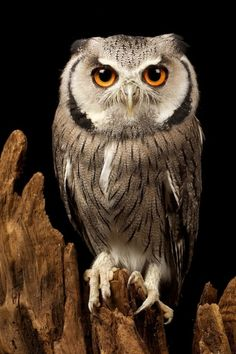 Wise owl has opinions.