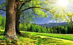 Sunny Summer Day Wallpapers Pictures Photos Images