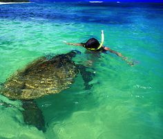 snorkler hawaii sea turtle..I've done this in Maui! Touched a sea turtle while snorkeling!! :)