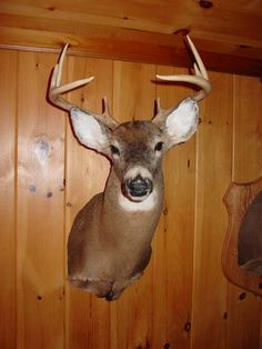 """Shed Antler Addiction Decal 8"""" Camo Taxidermy Rack Whitetail Deer Antlers TM"""