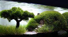 "Aquascaping | Our Preciousss..."" by ADist | AquaScaping World Forum"