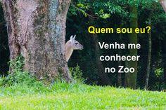 Sapucaia do Sul, no sul do Brasil