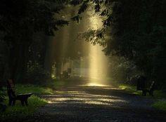 Lichteinfall in Park