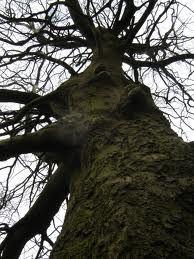 Trees.....