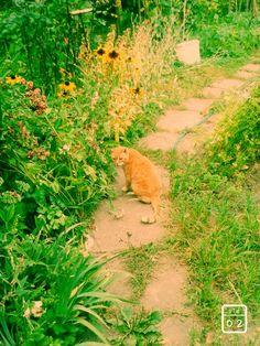 #rudy #koteł #sweet
