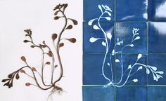 #so65 #piastrelle  World of Driftwood: Cyanotype Magic: Blueware tiles by GLITHERO