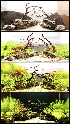 Aquarium Garden, Aquarium Landscape, Aquarium Setup, Aquarium Design, Aquarium Decorations, Planted Aquarium, Aquarium Aquascape, Vivarium, Paludarium