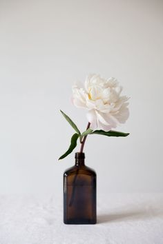 vintage finds for a modern world: brown bottles.- vintage finds for a modern world: brown bottles. vintage finds for a modern world: brown bottles / my little fabric - My Flower, White Flowers, Beautiful Flowers, White Peonies, Simple Flowers, Flowers In A Vase, Floral Flowers, Flower Types, Brown Flowers