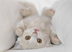 I love cats! - Babies Pets and Animals Photo - Fanpop fanclubs Cute Kittens, Cats And Kittens, Baby Animals, Funny Animals, Cute Animals, Funny Cats, Small Animals, Funny Cat Pictures, Animal Pictures